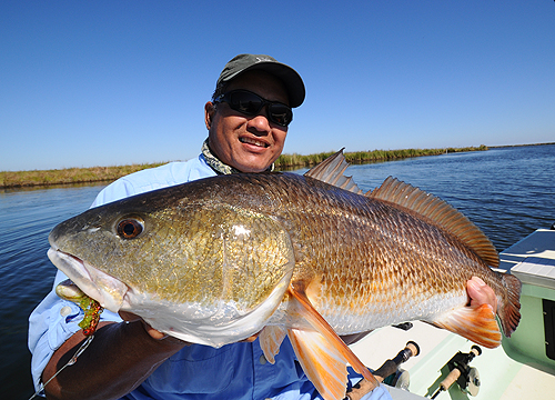 Redfish on crab fly.