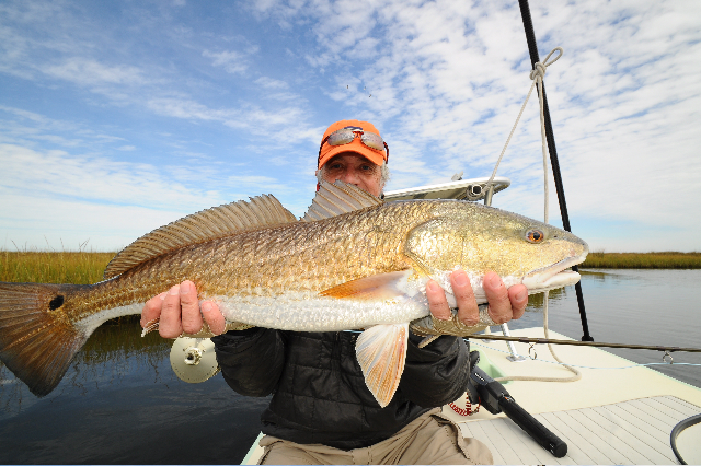 Another fatty redfish on fly.