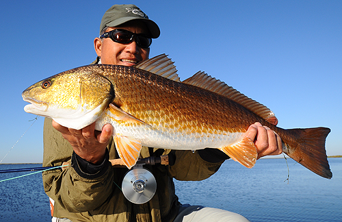 Louisiana marsh fishing on fly fly water expeditions for Louisiana redfish fly fishing