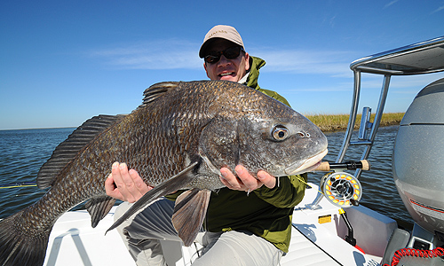Louisiana Black drum caught on fly