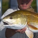 louisiana fly fishing charter