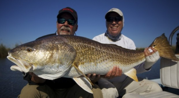 Louisiana redfish sight fishing archives fly water for Louisiana redfish fly fishing