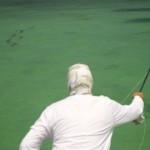 fly fishing school of tarpon