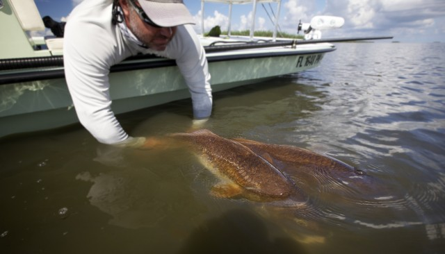 Fly fishing louisiana for monster red fish in september for Fly fishing new orleans