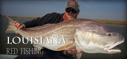 louisiana-redfish