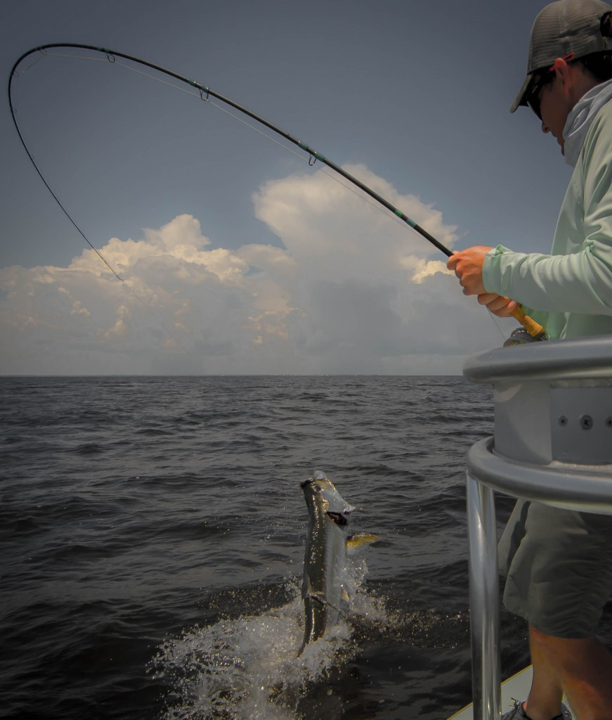 Fly fishing for tarpon in florida fly water expeditions for Florida tarpon fishing