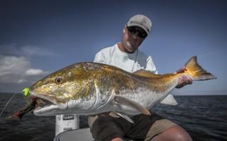 Big Louisiana red fish fly fishing