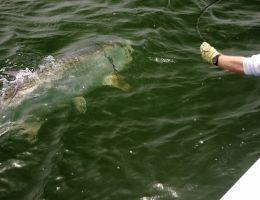 florida fly fishing for tarpon